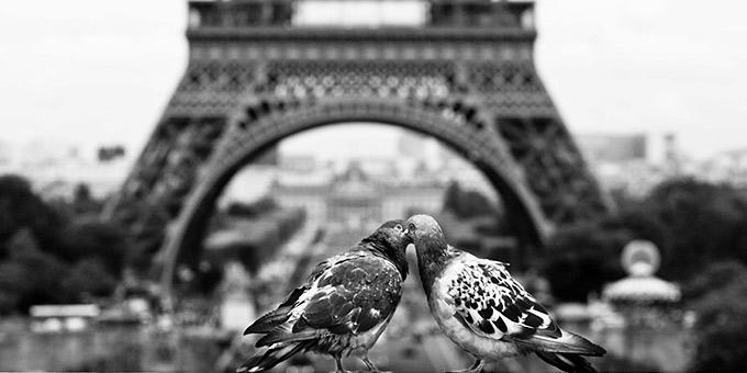 diaforetiko.gr : filiountai GAL 3 366988 TE4560 4 Οκτωβρίου: Παγκόσμια Ημέρα των Ζώων!   24 τρυφερές φωτογραφίες με ζωάκια που φιλιούνται !!