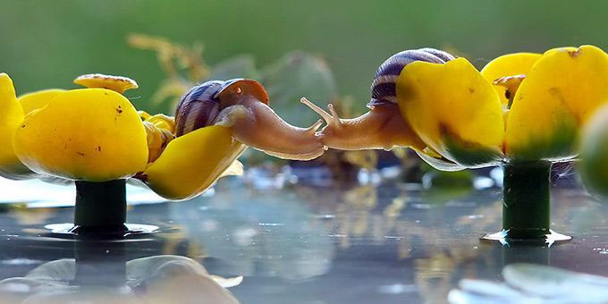 diaforetiko.gr : filiountai GAL 4 366987 4L1523 4 Οκτωβρίου: Παγκόσμια Ημέρα των Ζώων!   24 τρυφερές φωτογραφίες με ζωάκια που φιλιούνται !!