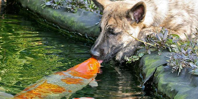 diaforetiko.gr : filiountai GAL 6 366985 S225OP 4 Οκτωβρίου: Παγκόσμια Ημέρα των Ζώων!   24 τρυφερές φωτογραφίες με ζωάκια που φιλιούνται !!