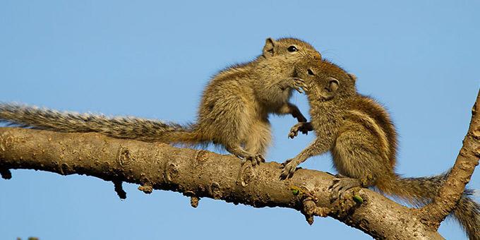 diaforetiko.gr : filiountai GAL 8 366983 G00Z23 4 Οκτωβρίου: Παγκόσμια Ημέρα των Ζώων!   24 τρυφερές φωτογραφίες με ζωάκια που φιλιούνται !!