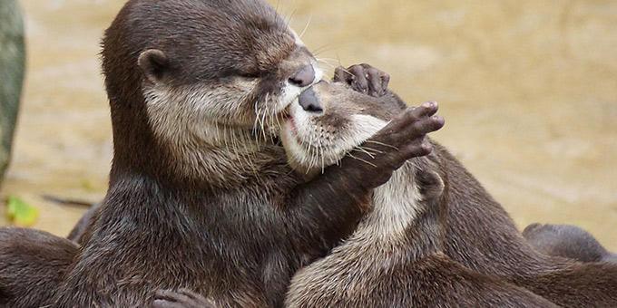 diaforetiko.gr : filiountai GAL 9 366982 4C0261 4 Οκτωβρίου: Παγκόσμια Ημέρα των Ζώων!   24 τρυφερές φωτογραφίες με ζωάκια που φιλιούνται !!
