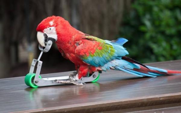 funny parrot 1579493 600x374 ΑΝΕΚΔΟΤΟ: Ο Παπαγάλος που… σκοτώνει !!!