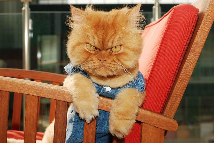 diaforetiko.gr : garfi evil grumpy persian cat 12  700 ΠΟΛΛΑ ΝΕΥΡΑ !!! Αυτός είναι ο Garfi, ο πιο «στραβωμένος» γάτος του κόσμου !!!!