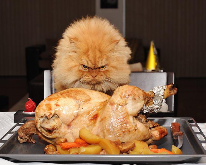 diaforetiko.gr : garfi evil grumpy persian cat 14  700 ΠΟΛΛΑ ΝΕΥΡΑ !!! Αυτός είναι ο Garfi, ο πιο «στραβωμένος» γάτος του κόσμου !!!!