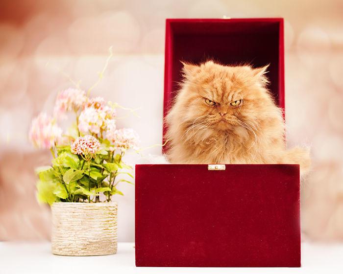 diaforetiko.gr : garfi evil grumpy persian cat 25  700 ΠΟΛΛΑ ΝΕΥΡΑ !!! Αυτός είναι ο Garfi, ο πιο «στραβωμένος» γάτος του κόσμου !!!!