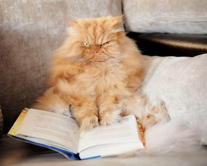 diaforetiko.gr : garfi evil grumpy persian cat 28  700 ΠΟΛΛΑ ΝΕΥΡΑ !!! Αυτός είναι ο Garfi, ο πιο «στραβωμένος» γάτος του κόσμου !!!!