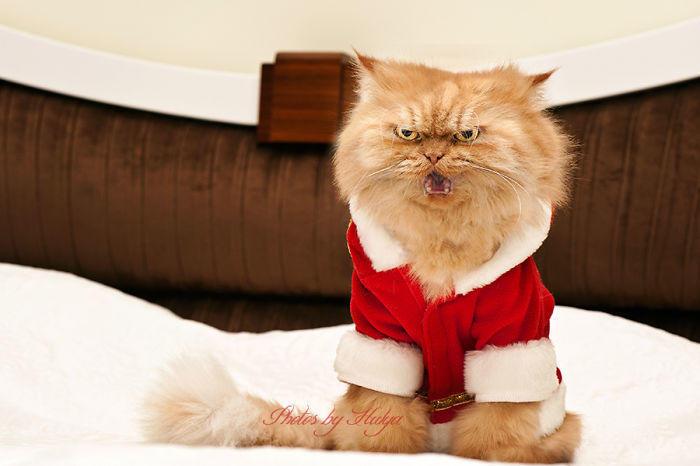 diaforetiko.gr : garfi evil grumpy persian cat 31  700 ΠΟΛΛΑ ΝΕΥΡΑ !!! Αυτός είναι ο Garfi, ο πιο «στραβωμένος» γάτος του κόσμου !!!!