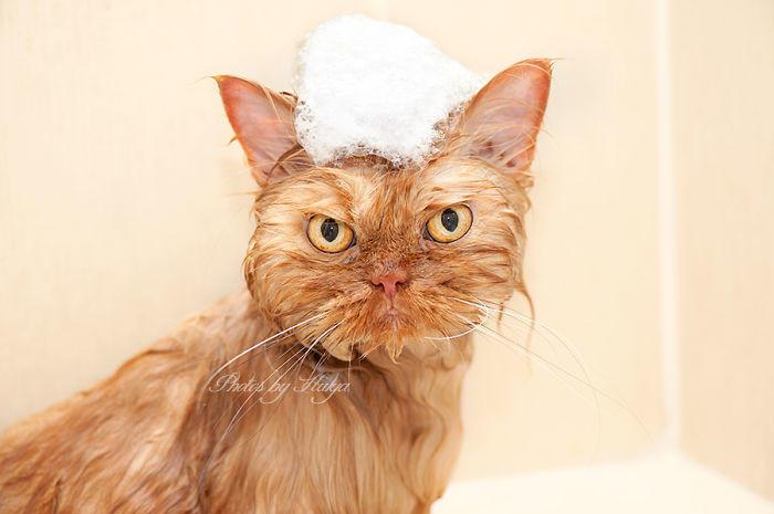 diaforetiko.gr : garfi evil grumpy persian cat 37  700 ΠΟΛΛΑ ΝΕΥΡΑ !!! Αυτός είναι ο Garfi, ο πιο «στραβωμένος» γάτος του κόσμου !!!!
