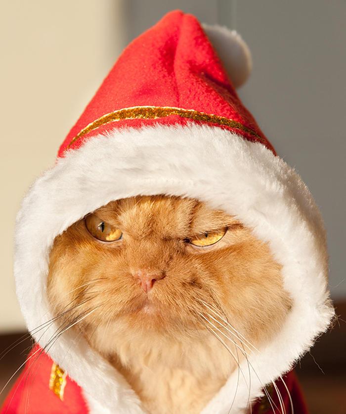 diaforetiko.gr : garfi evil grumpy persian cat 6  700 ΠΟΛΛΑ ΝΕΥΡΑ !!! Αυτός είναι ο Garfi, ο πιο «στραβωμένος» γάτος του κόσμου !!!!