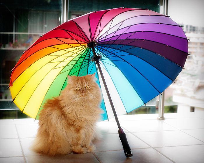 diaforetiko.gr : garfi evil grumpy persian cat 7  700 ΠΟΛΛΑ ΝΕΥΡΑ !!! Αυτός είναι ο Garfi, ο πιο «στραβωμένος» γάτος του κόσμου !!!!