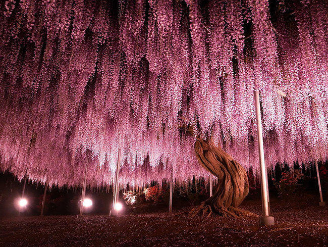 diaforetiko.gr : 031361d57e24639004053f80b63d884b 650x  17 Πανέμορφα Αιωνόβια Δέντρα Που Επιβεβαιώνουν Το Θαύμα της Φύσης.