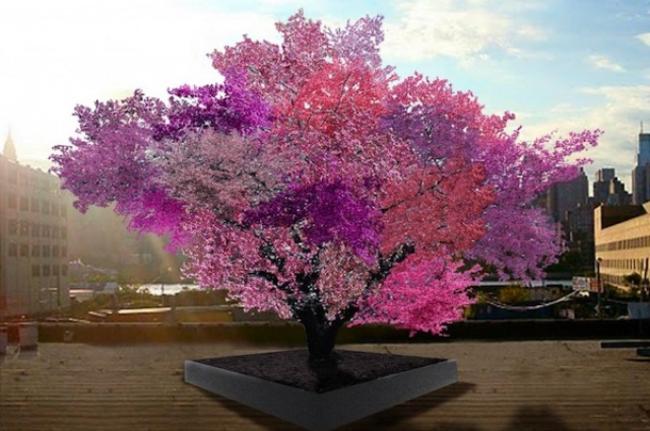 diaforetiko.gr : 195c243025b8f33a4b406da9dfd0ea26 650x  17 Πανέμορφα Αιωνόβια Δέντρα Που Επιβεβαιώνουν Το Θαύμα της Φύσης.