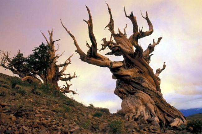 diaforetiko.gr : 21d40d97999c120a69e133252bf45239 650x  17 Πανέμορφα Αιωνόβια Δέντρα Που Επιβεβαιώνουν Το Θαύμα της Φύσης.