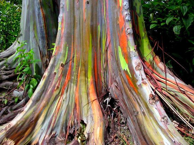 diaforetiko.gr : 26b7bb1061084666424b204e69aa37a9 650x  17 Πανέμορφα Αιωνόβια Δέντρα Που Επιβεβαιώνουν Το Θαύμα της Φύσης.