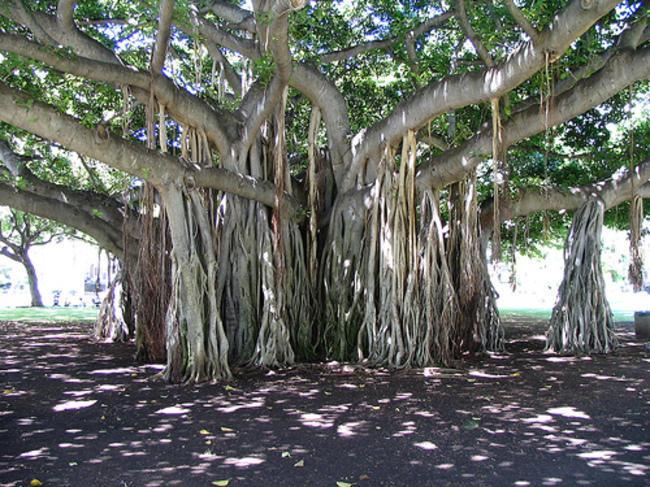 diaforetiko.gr : 3cf14f7e77e5c9975b077a72a4e727a0 650x  17 Πανέμορφα Αιωνόβια Δέντρα Που Επιβεβαιώνουν Το Θαύμα της Φύσης.