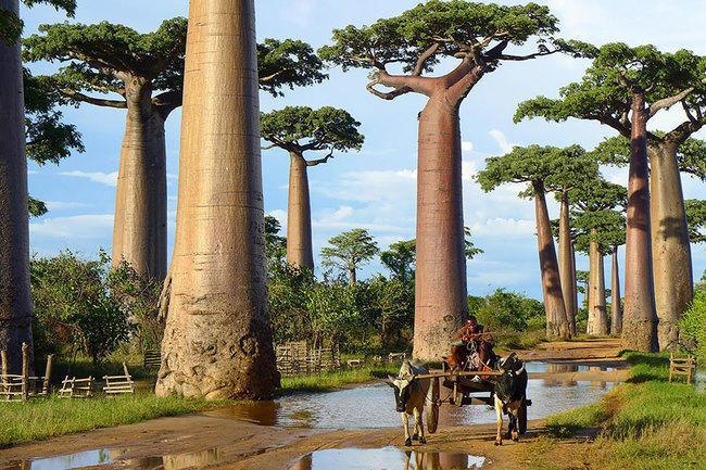 diaforetiko.gr : 4bc807ee1fc289d697b1a3b952bc6377 650x  17 Πανέμορφα Αιωνόβια Δέντρα Που Επιβεβαιώνουν Το Θαύμα της Φύσης.