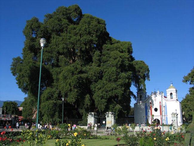 diaforetiko.gr : 5ac03dcda80eec18e5db928c358737eb 650x  17 Πανέμορφα Αιωνόβια Δέντρα Που Επιβεβαιώνουν Το Θαύμα της Φύσης.