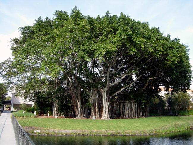 diaforetiko.gr : 6dc3c48c34e875b866b4cb0c959d163b 650x  17 Πανέμορφα Αιωνόβια Δέντρα Που Επιβεβαιώνουν Το Θαύμα της Φύσης.