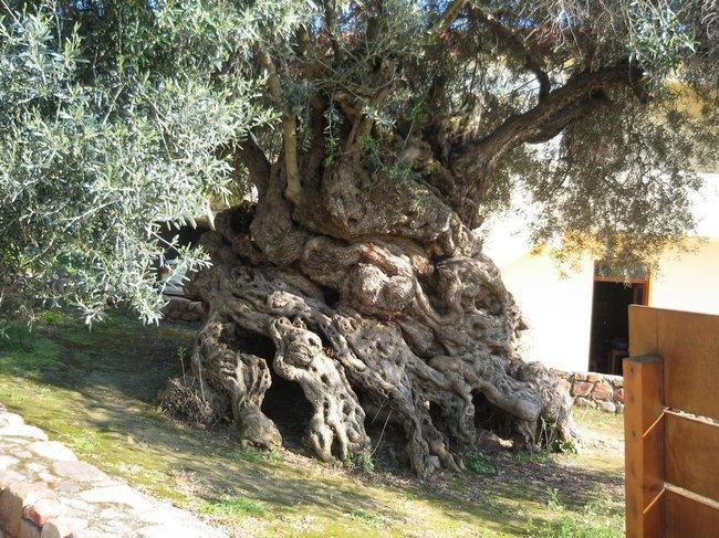 diaforetiko.gr : 79cdaff9b47afded5d279bf507092f07 650x  17 Πανέμορφα Αιωνόβια Δέντρα Που Επιβεβαιώνουν Το Θαύμα της Φύσης.