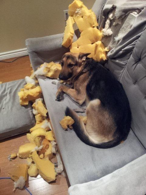 diaforetiko.gr : 980x1 11 ανήξερα σκυλιά που δεν έχουν ιδέα ποιος έκανε αυτό το χαμό. Εσύ τα πιστεύεις;
