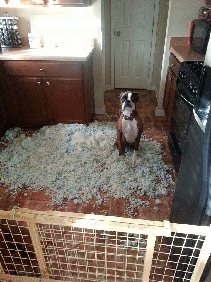 diaforetiko.gr : 980x4 11 ανήξερα σκυλιά που δεν έχουν ιδέα ποιος έκανε αυτό το χαμό. Εσύ τα πιστεύεις;