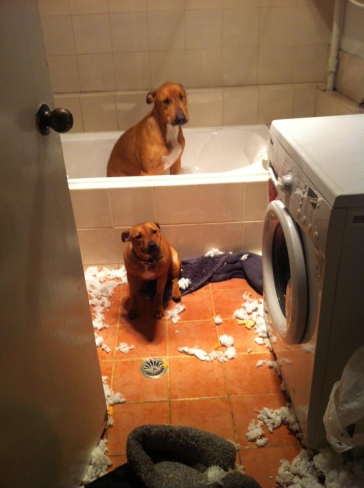 diaforetiko.gr : 980x8 11 ανήξερα σκυλιά που δεν έχουν ιδέα ποιος έκανε αυτό το χαμό. Εσύ τα πιστεύεις;