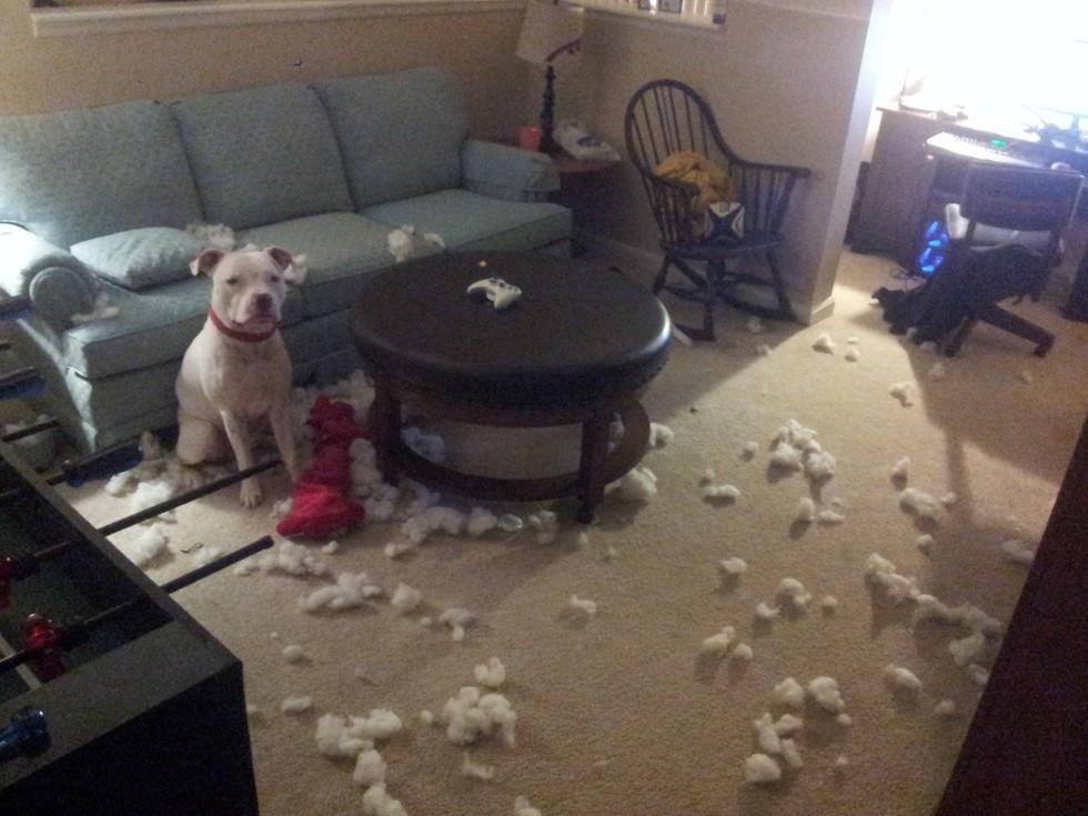 diaforetiko.gr : 980x9 11 ανήξερα σκυλιά που δεν έχουν ιδέα ποιος έκανε αυτό το χαμό. Εσύ τα πιστεύεις;
