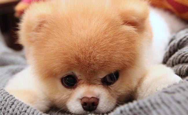 b5d94f552deb Μάθε τι σκύλος σου ταιριάζει ανάλογα με το χαρακτήρα σου! Κάνε το ...