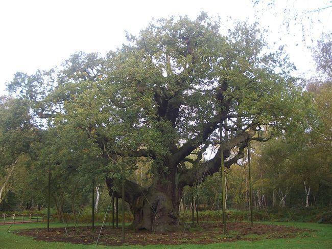 diaforetiko.gr : df203471977f92e5ae6b0ec44ded69a6 650x  17 Πανέμορφα Αιωνόβια Δέντρα Που Επιβεβαιώνουν Το Θαύμα της Φύσης.