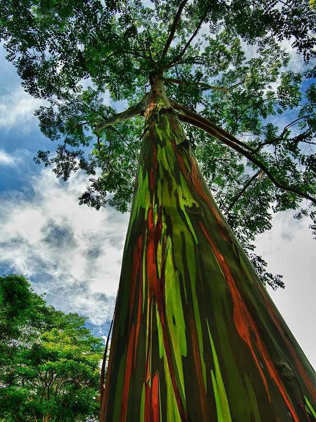 diaforetiko.gr : f8e3452330e760f8ddc8e261e79ed112 650x  17 Πανέμορφα Αιωνόβια Δέντρα Που Επιβεβαιώνουν Το Θαύμα της Φύσης.