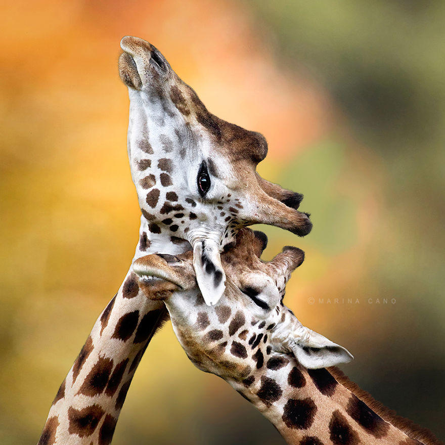 diaforetiko.gr : 239  880 20 φωτογραφίες που αποδεικνύουν πως τα ζώα αγαπιούνται όπως ακριβώς και οι άνθρωποι.