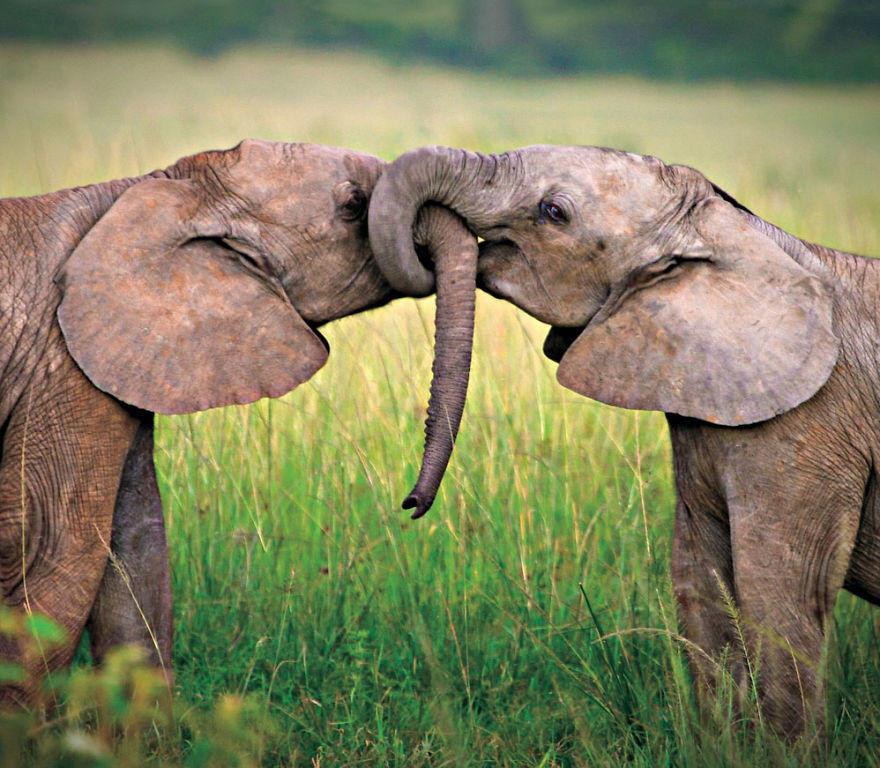 diaforetiko.gr : animal couples elephants  880 20 φωτογραφίες που αποδεικνύουν πως τα ζώα αγαπιούνται όπως ακριβώς και οι άνθρωποι.