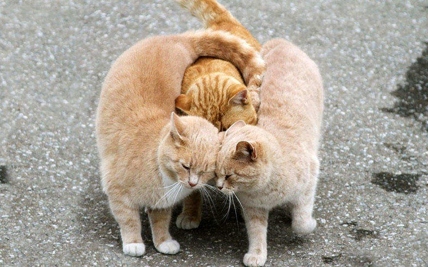diaforetiko.gr : animal love friendship 101  880 20 φωτογραφίες που αποδεικνύουν πως τα ζώα αγαπιούνται όπως ακριβώς και οι άνθρωποι.