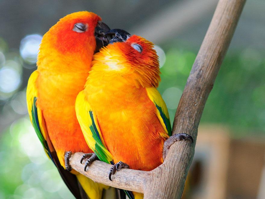 diaforetiko.gr : animal love friendship 110  880 20 φωτογραφίες που αποδεικνύουν πως τα ζώα αγαπιούνται όπως ακριβώς και οι άνθρωποι.