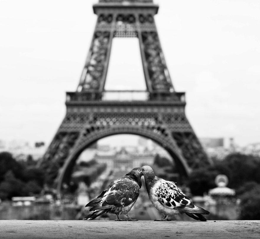 diaforetiko.gr : animal love friendship 31  880 20 φωτογραφίες που αποδεικνύουν πως τα ζώα αγαπιούνται όπως ακριβώς και οι άνθρωποι.