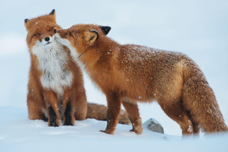 diaforetiko.gr : animals love couple 10  880 20 φωτογραφίες που αποδεικνύουν πως τα ζώα αγαπιούνται όπως ακριβώς και οι άνθρωποι.