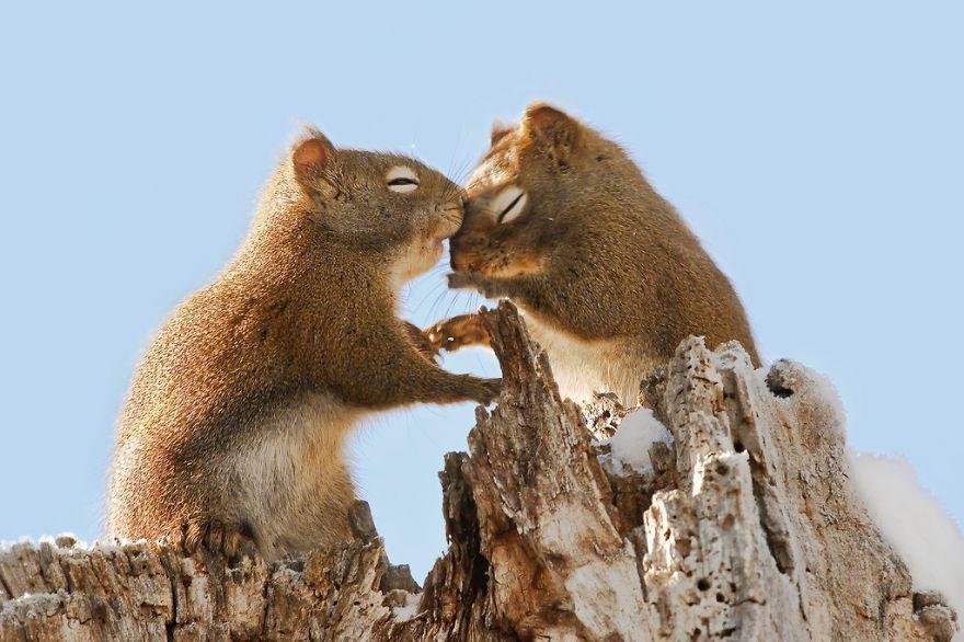diaforetiko.gr : animals love couple 1  880 20 φωτογραφίες που αποδεικνύουν πως τα ζώα αγαπιούνται όπως ακριβώς και οι άνθρωποι.
