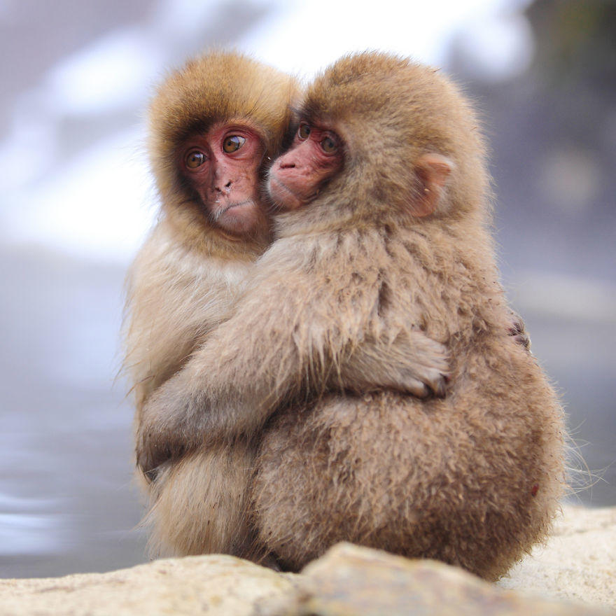 diaforetiko.gr : animals love couple 2  880 20 φωτογραφίες που αποδεικνύουν πως τα ζώα αγαπιούνται όπως ακριβώς και οι άνθρωποι.