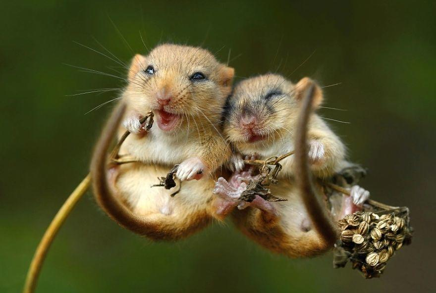 diaforetiko.gr : animals love couple 7  880 20 φωτογραφίες που αποδεικνύουν πως τα ζώα αγαπιούνται όπως ακριβώς και οι άνθρωποι.