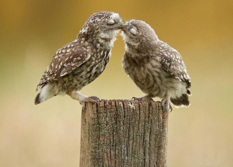 diaforetiko.gr : animals love couple 8  880 20 φωτογραφίες που αποδεικνύουν πως τα ζώα αγαπιούνται όπως ακριβώς και οι άνθρωποι.