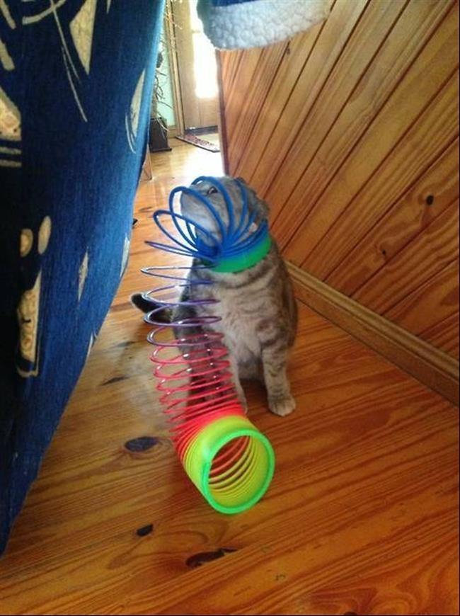 diaforetiko.gr : 1313 15 γάτες που μάλλον μετάνιωσαν για την περιέργεια τους.