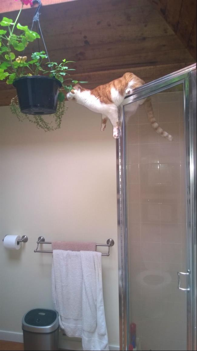 diaforetiko.gr : 167 15 γάτες που μάλλον μετάνιωσαν για την περιέργεια τους.
