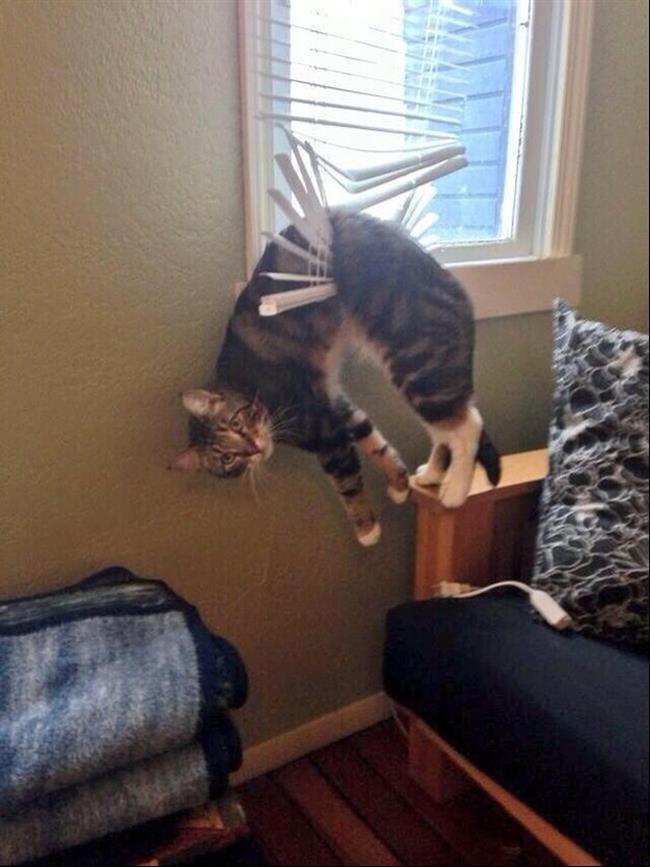 diaforetiko.gr : 224 15 γάτες που μάλλον μετάνιωσαν για την περιέργεια τους.