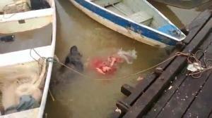 VID: Piranhas In Feeding Frenzy On Amazon River