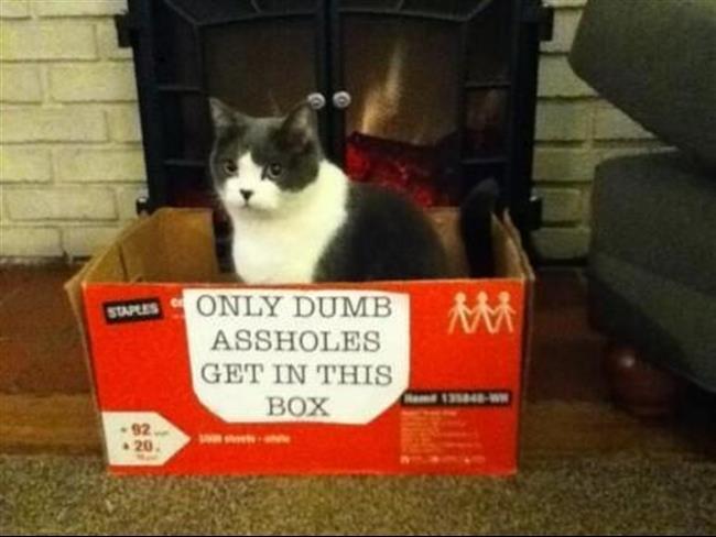 diaforetiko.gr : 417 15 γάτες που μάλλον μετάνιωσαν για την περιέργεια τους.