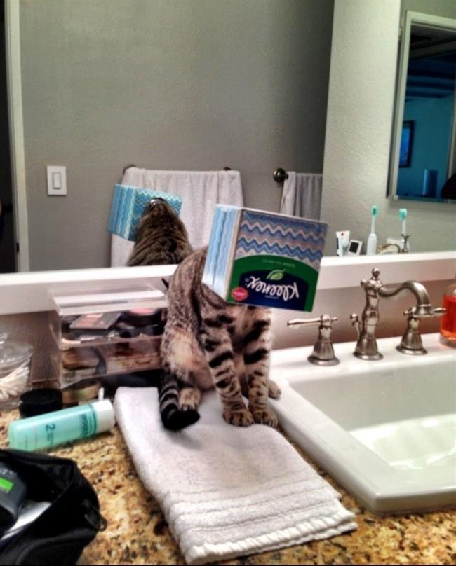 diaforetiko.gr : 515 15 γάτες που μάλλον μετάνιωσαν για την περιέργεια τους.