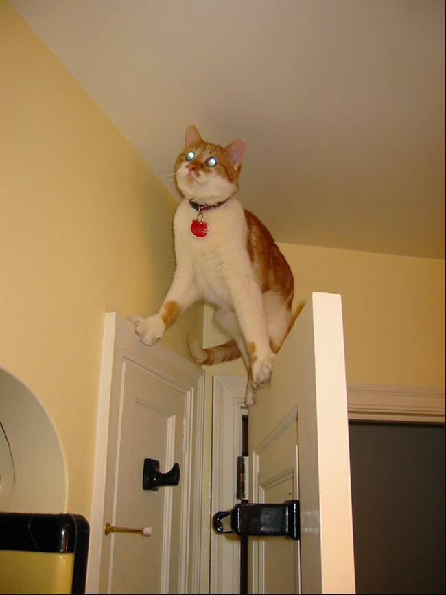 diaforetiko.gr : 911 15 γάτες που μάλλον μετάνιωσαν για την περιέργεια τους.