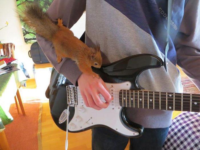 diaforetiko.gr : adopted wild red squirrel baby arttu finland 22  Η συγκινητική ιστορία ενός τραυματισμένου κόκκινου σκίουρου που υιοθετήθηκε από ανθρώπους.