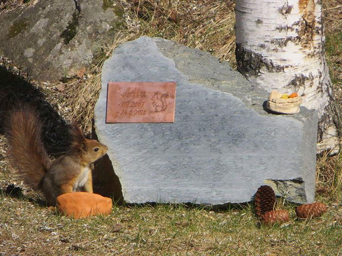 diaforetiko.gr : adopted wild red squirrel baby arttu finland 3  Η συγκινητική ιστορία ενός τραυματισμένου κόκκινου σκίουρου που υιοθετήθηκε από ανθρώπους.