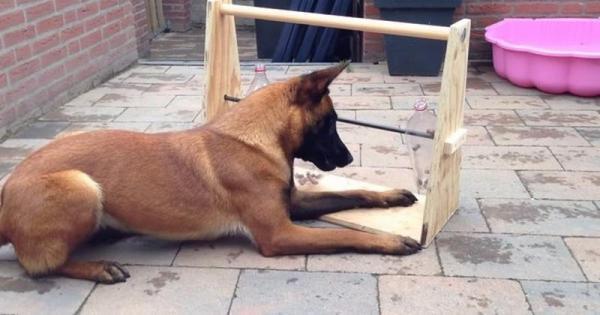 Κρατήσετε το σκύλο σας απασχολημένο για ώρες με αυτό το απλό και έξυπνο κολπάκι